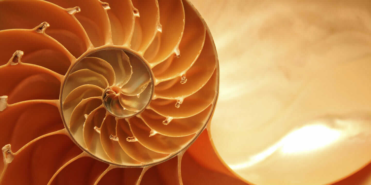 shell as design in nature