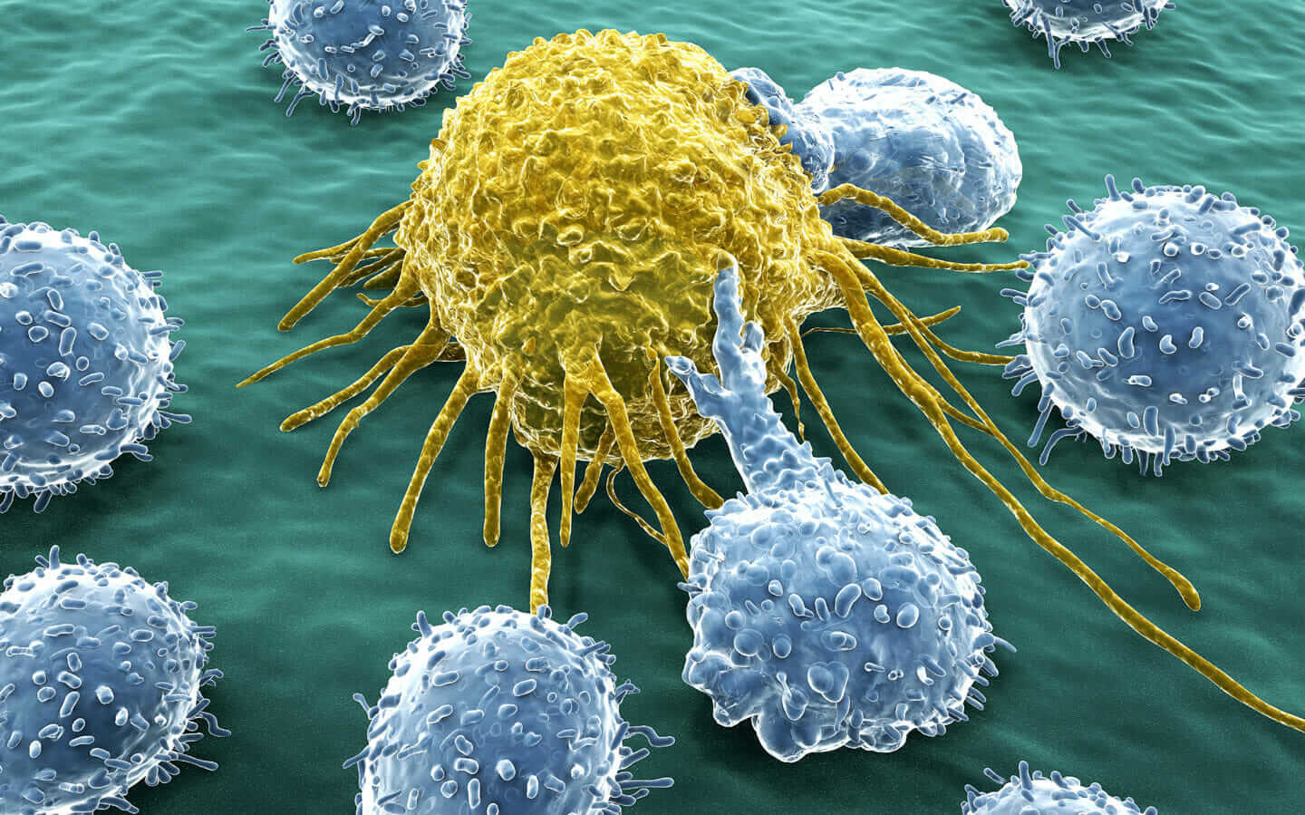 T-lymphocytes fight cancer cell