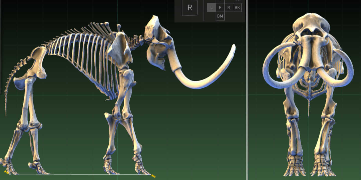 smithsonian woolly mammoth scan