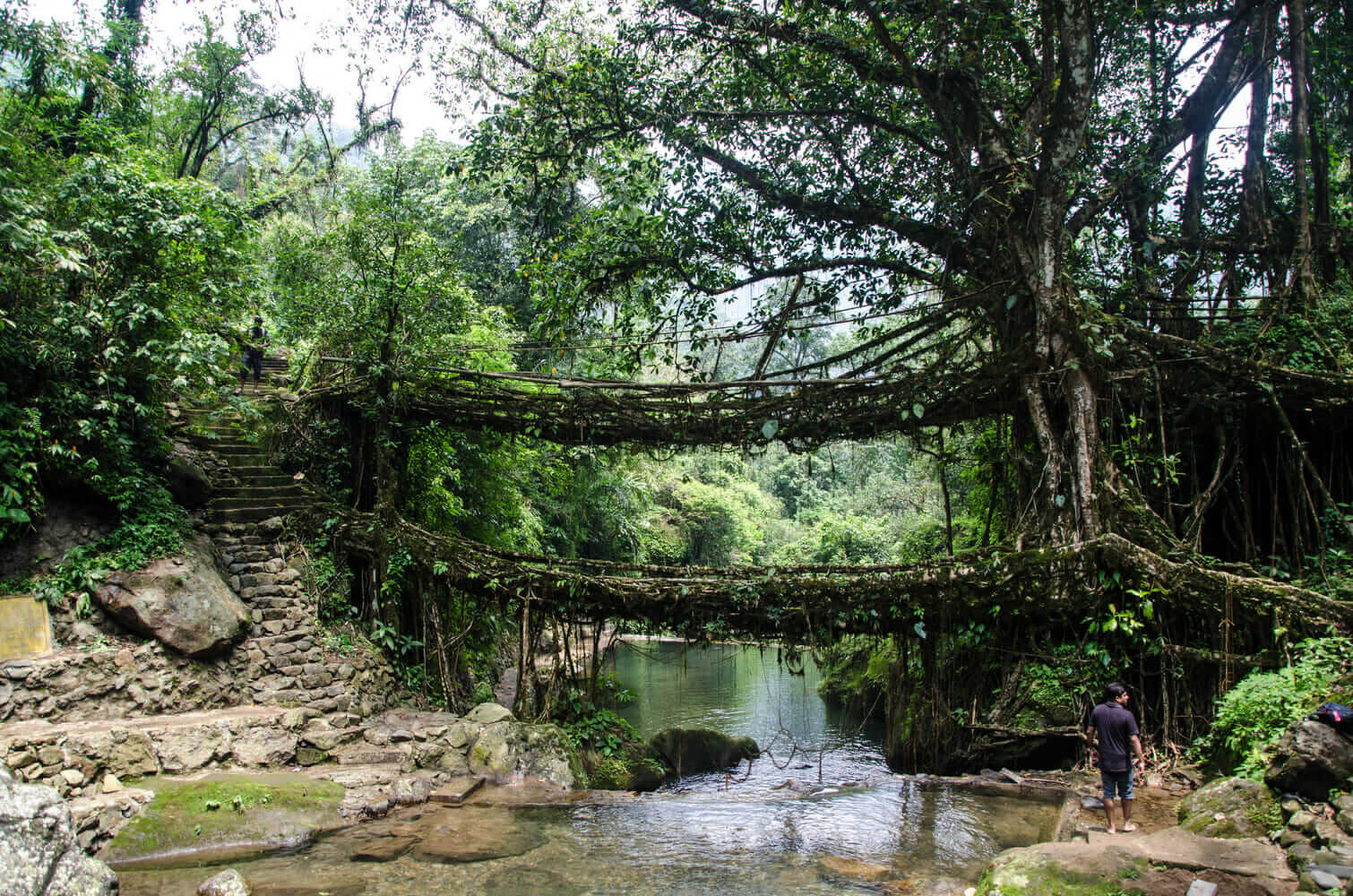 Living Root Bridge in Meghalaya, India.