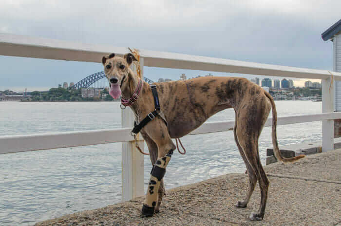 Millie and her prosthesis