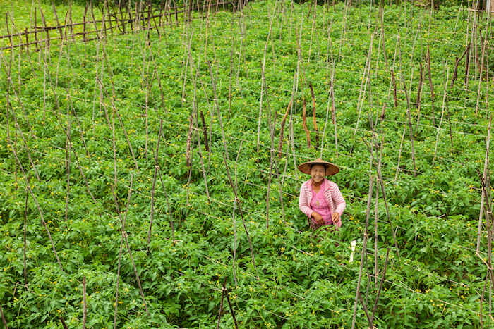 sustainable agriculture practices myanmar proximity designs