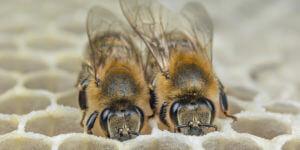 Bee happy – mit vernetzten Bienenstöcken gegen Klimawandel und Artensterben