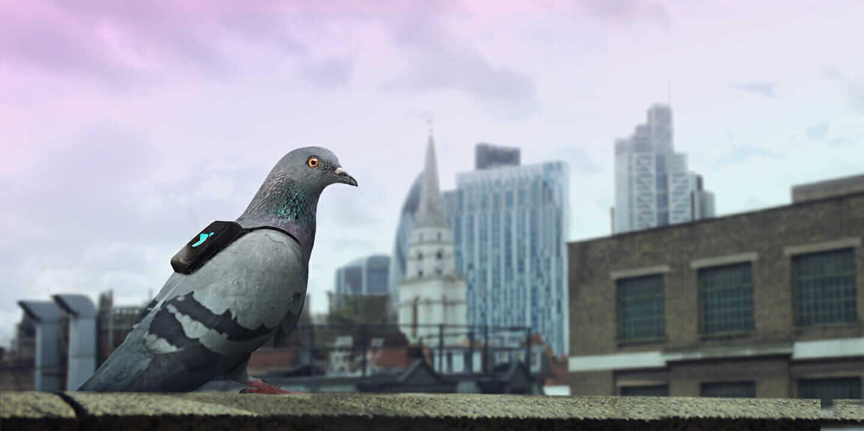 大気汚染モニタリング鳩