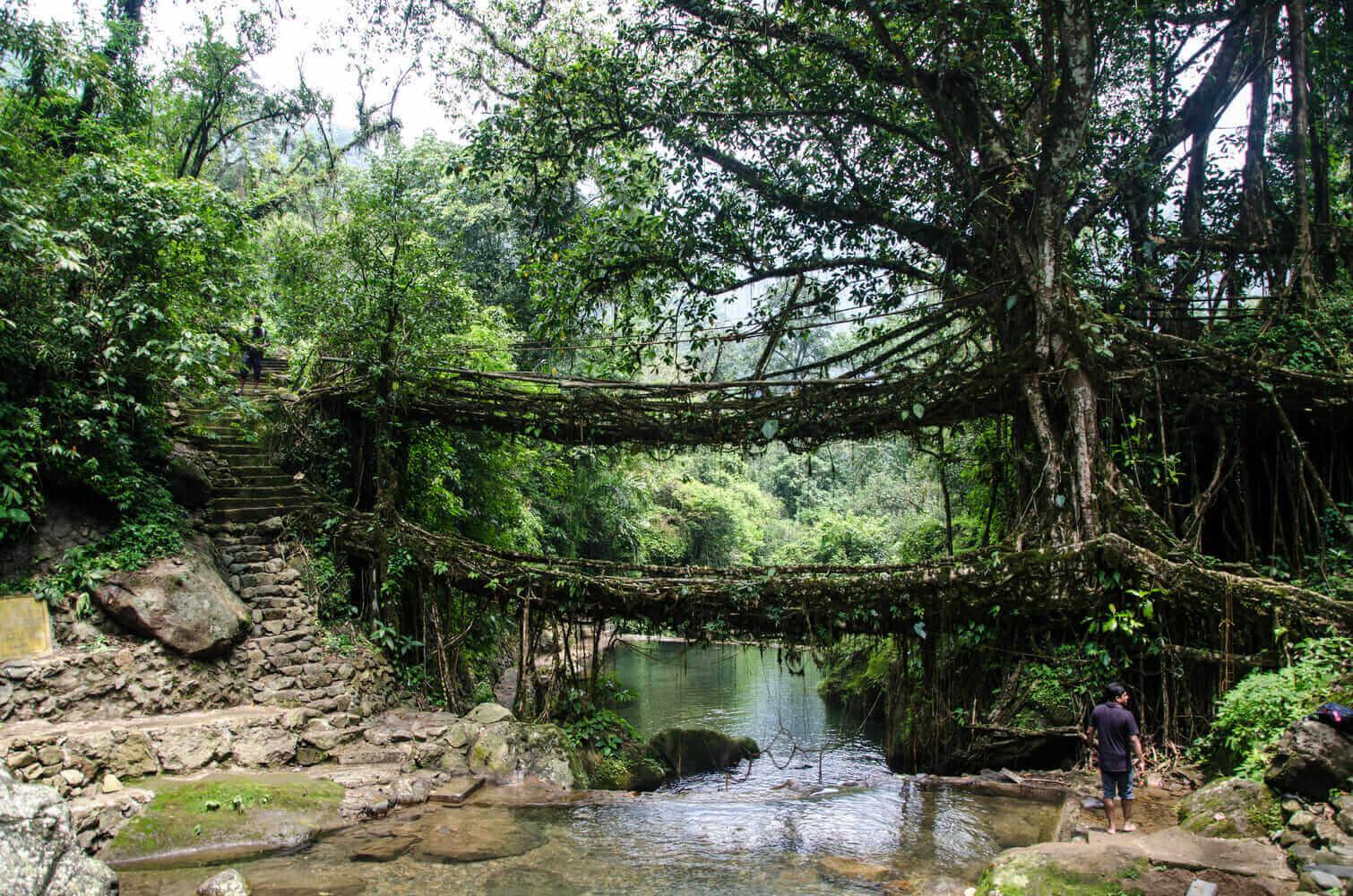 Living Root Bridges, Meghalaya, India