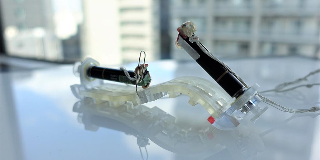 イモムシ型ソフトロボット 梅舘拓也 川原圭博