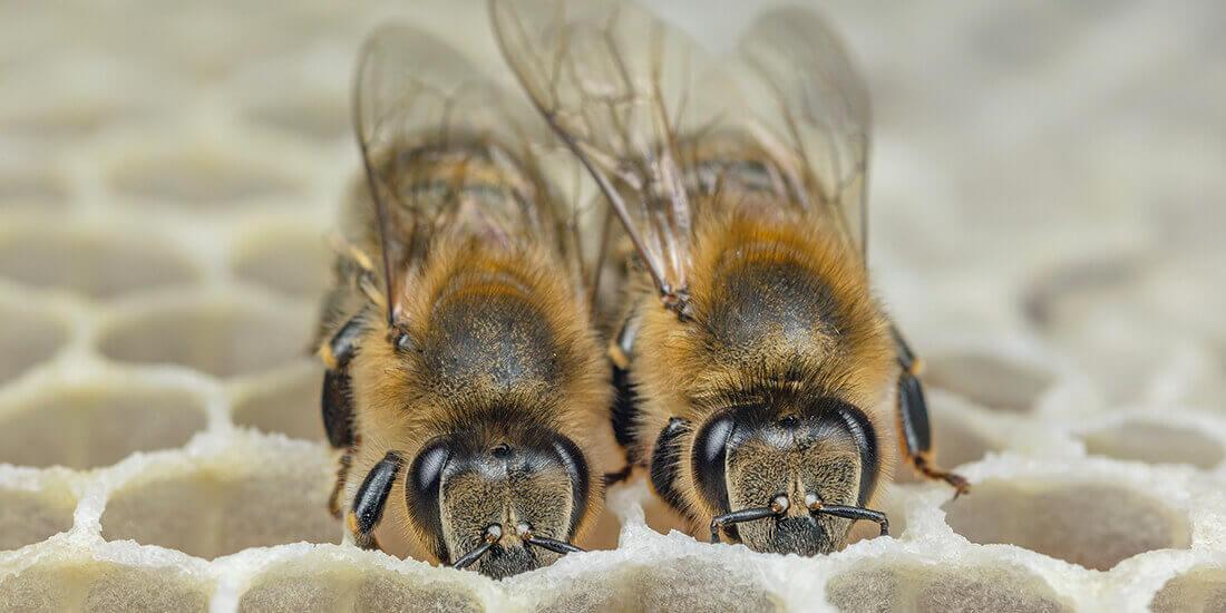 ハチ 気候変動