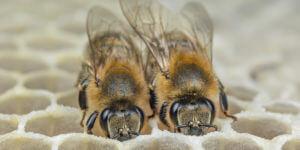 Protection de l'environnement : ça bourdonne dans les ruches connectées de we4bee !